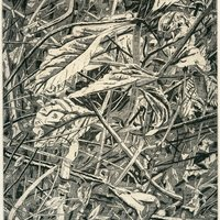 "<p align=""center"">Entanglement</p>